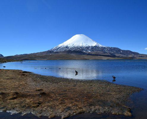 Lauca, le parc national à l'extrême Nord du Chili