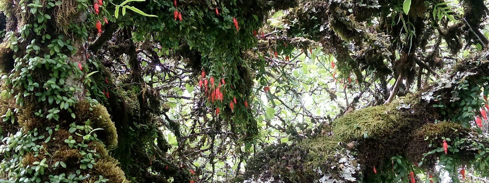 forêt pluviale tempérée