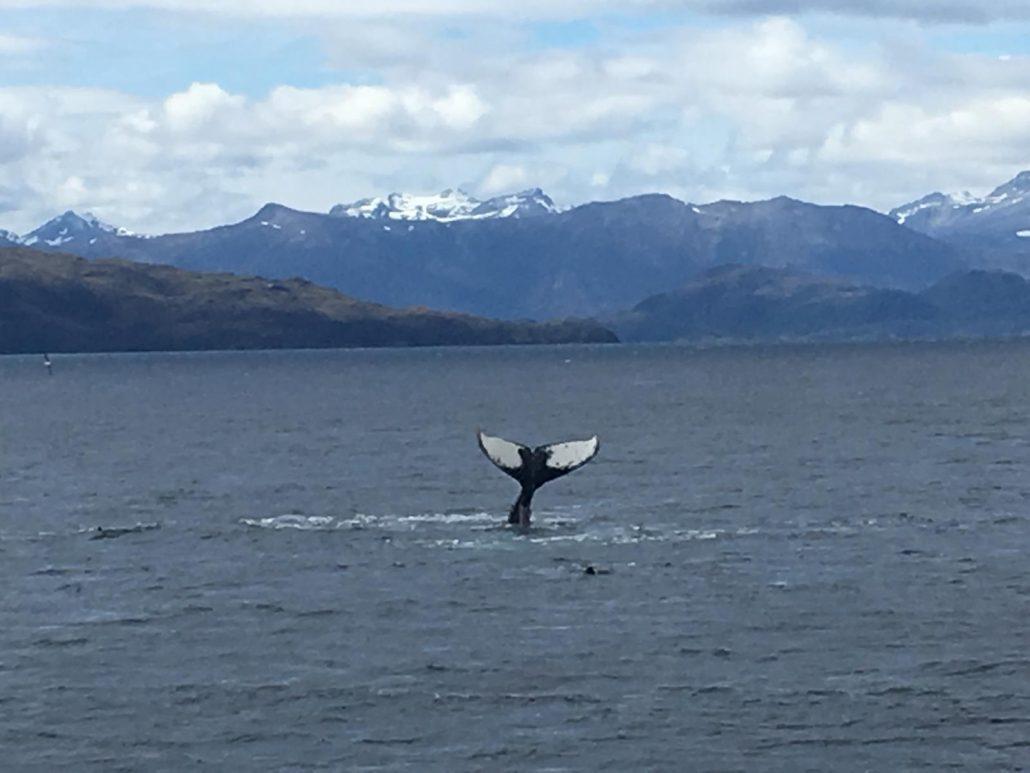 observation des baleines au Chili