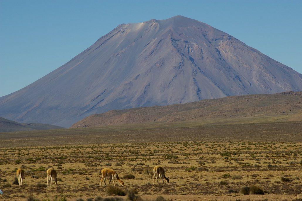 volcan Misti et vigognes, route Arequipa- canyon du Colca