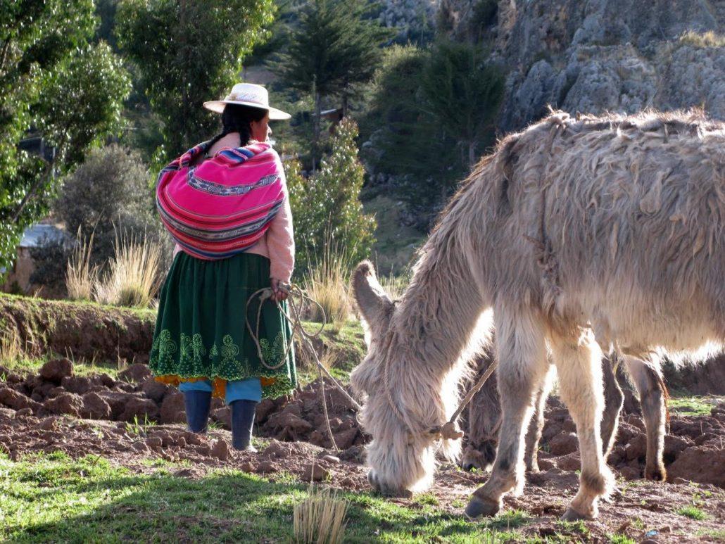 scène de la campagne péruvienne