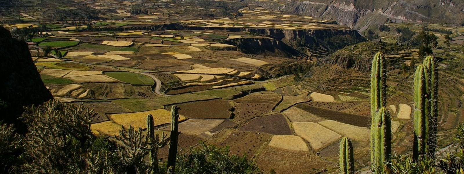 canyon du Colca, Arequipa