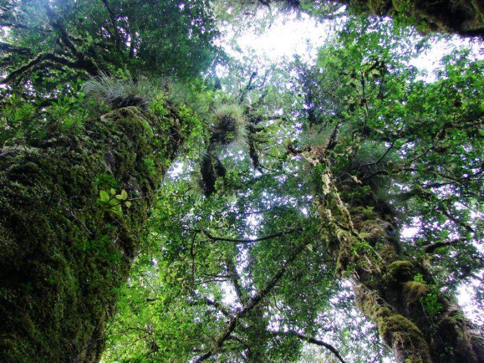 forêt pluviale