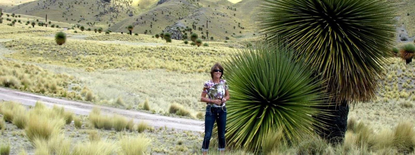 flore du Pérou, altiplano, Puno