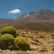 altiplano, plante de llareta