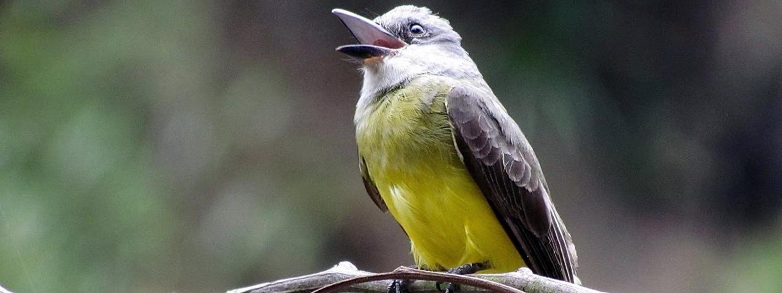 faune d'Amazonie péruvienne