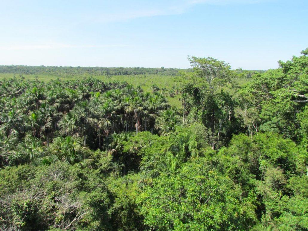 forêt tropicale Tambopata