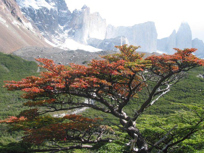 vallée du Français, Torres del Paine