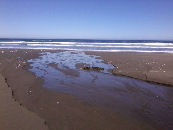 Colún-reserva costera valdiviana