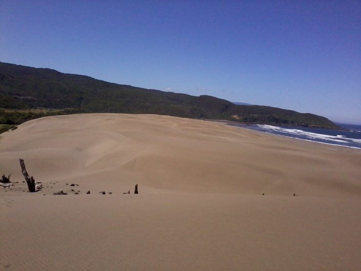 réserve costera valdiviana - sentier entre lagunes. la dune