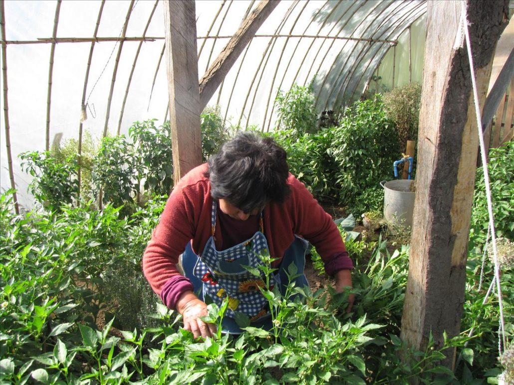 potager et plantes médicinales